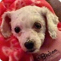 Adopt A Pet :: Marnie - La Costa, CA