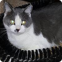 Adopt A Pet :: Duchess - Albemarle, NC