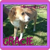 Adopt A Pet :: GRACIE - White River Junction, VT