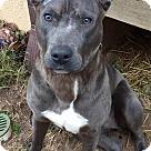 Adopt A Pet :: Hobbs