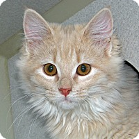 Adopt A Pet :: Catlin - Ruidoso, NM