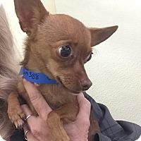 Adopt A Pet :: Pinky - San Marcos, CA