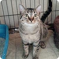Adopt A Pet :: Spirit - Chisholm, MN