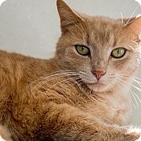 Adopt A Pet :: Rocket - Martinsville, IN