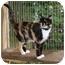 Photo 2 - Calico Cat for adoption in McDonough, Georgia - Barbie