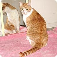 Adopt A Pet :: Monte - Scottsdale, AZ