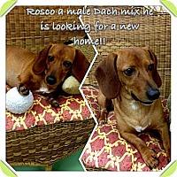 Adopt A Pet :: Rosco - Gadsden, AL