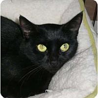 Adopt A Pet :: Mom Annika - lake elsinore, CA