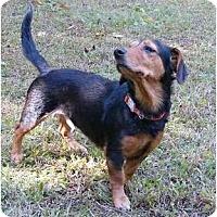Adopt A Pet :: Bimini - Mocksville, NC