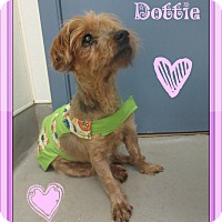 Adopt A Pet :: Dottie- Hospice Case - Lafayette, CA