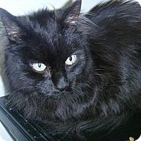 Adopt A Pet :: Danny Boy - Hamburg, NY