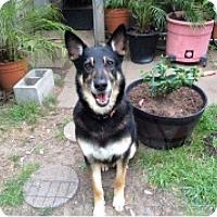 Adopt A Pet :: Keno - Houston, TX