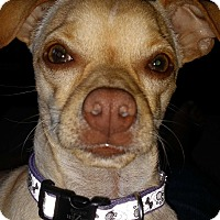 Adopt A Pet :: Chandler - Decatur, GA