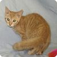 Adopt A Pet :: Parker - Powell, OH