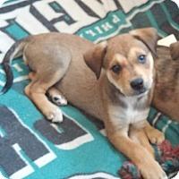 Adopt A Pet :: Autumn - Flemington, NJ