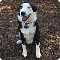 Adopt A Pet :: RIGGINS - San Pedro, CA