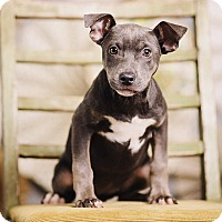 Adopt A Pet :: Janelle - Portland, OR