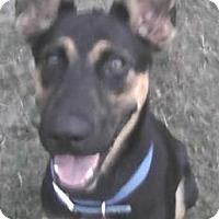 Adopt A Pet :: Kimber - Inverness, FL