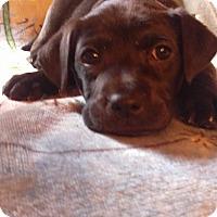 Adopt A Pet :: Molly - Charlestown, RI