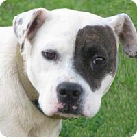 Adopt A Pet :: Peaches - Oxford, MS