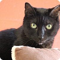 Adopt A Pet :: Kurtie - Sarasota, FL