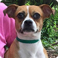 Adopt A Pet :: Honey - Orlando, FL