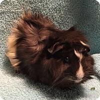 Adopt A Pet :: Edgar - Steger, IL