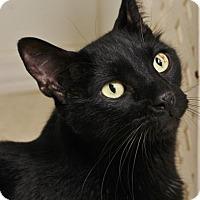 Adopt A Pet :: Jet - Venice, FL