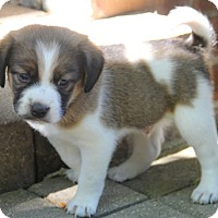 Adopt A Pet :: Newton - Mt. Prospect, IL