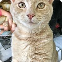 Adopt A Pet :: Sandy - Island Park, NY