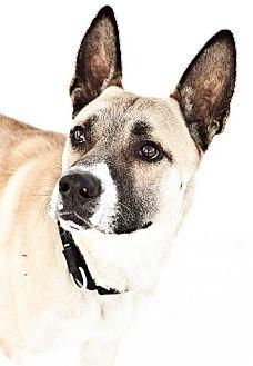 Akita Dog for adoption in Kenai, Alaska - Jack