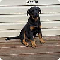 Adopt A Pet :: Roslin - Bartonsville, PA
