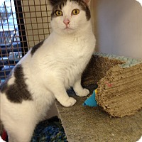 Adopt A Pet :: Fiona - San Ramon, CA