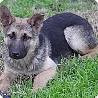 Adopt A Pet :: Silver - Yuba City, CA