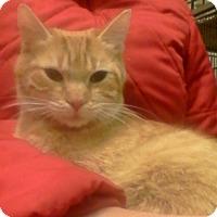 Adopt A Pet :: Dexi - Trevose, PA