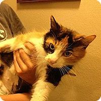 Adopt A Pet :: Santana - Troy, OH