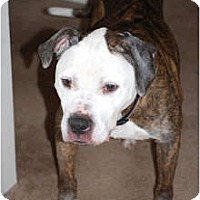 Adopt A Pet :: Nova - Shavertown, PA