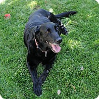 Adopt A Pet :: Keeta - Denver, CO