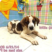 Adopt A Pet :: Willie - South Jersey, NJ