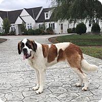 Adopt A Pet :: Logan - Bellflower, CA