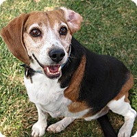 Adopt A Pet :: MILO - Hurricane, UT