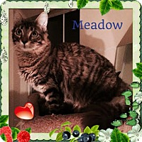 Adopt A Pet :: Meadow - Harrisburg, NC
