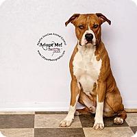 Adopt A Pet :: Billy Bob - Apache Junction, AZ
