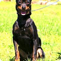 Adopt A Pet :: Bullet - Glastonbury, CT