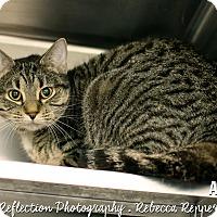 Adopt A Pet :: Alisha - Appleton, WI