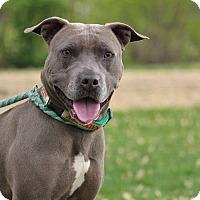 Adopt A Pet :: Raven - Queenstown, MD
