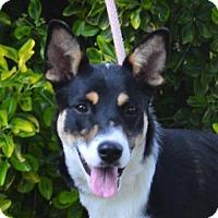 Adopt A Pet :: **SAGE** MEET JUNE 11TH! - Mukwonago, WI