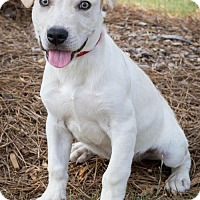 Adopt A Pet :: Sam - Atlanta, GA