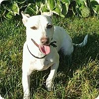 Adopt A Pet :: DOUG - Rossford, OH