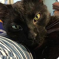 Adopt A Pet :: Lucas - Bowie, MD